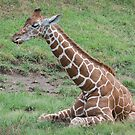 Baby Giraffe by Michele Markley