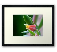 ©NS TT Flower IAB Framed Print