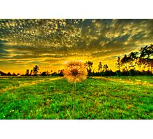 Dandelion in the Sunset Photographic Print