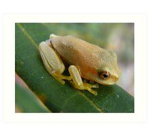 cute little froglet Art Print