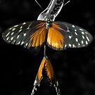 Butterflies in Love by Gary Pope
