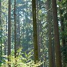Sunny Trees by Jennifer Suttle