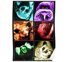 Colourful Critters Poster