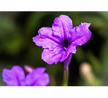 Purple Paradise Photographic Print