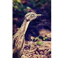 Curlew Photographic Print
