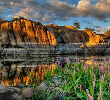 Willow Cove Reflect 1 by Bob Larson