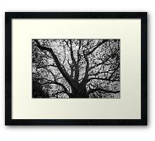 Tree Bones Framed Print
