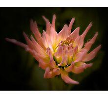 Kinsale Flower Photographic Print