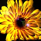 Flashlight Flower by Cleber Design Photo