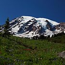 Alpine Flowers. Mount Rainier by Olga Zvereva