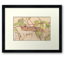 Charlie the Squirrel Framed Print