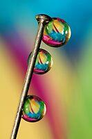 Pin Drop by Sharon Johnstone