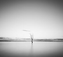 Cold and Alone by Adrian Alford Photography