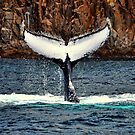 Quite a Tail - Nelsons Bay by Step9