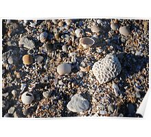 Shells on the beach >> Poster