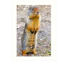 Wild squirrel... ??  Art Print