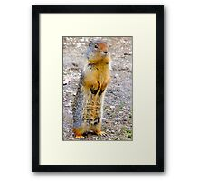 Wild squirrel... ??  Framed Print
