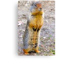 Wild squirrel... ??  Canvas Print
