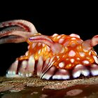 Fancy Nudi - Philippines by PatrickNeumann