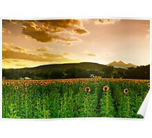 A Rural Sunflower Sky Poster