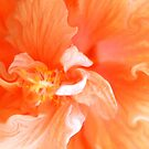 Orange Hibiscus Art by Kim McClain Gregal