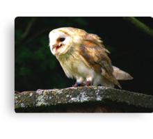 Barn Owl -4 Canvas Print