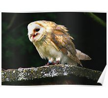 Barn Owl -4 Poster