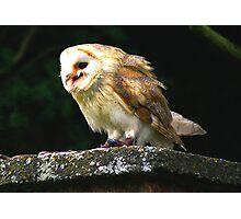 Barn Owl -4 Photographic Print