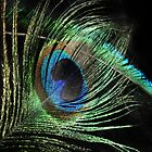 Peacock Feathers by emilygoodwin