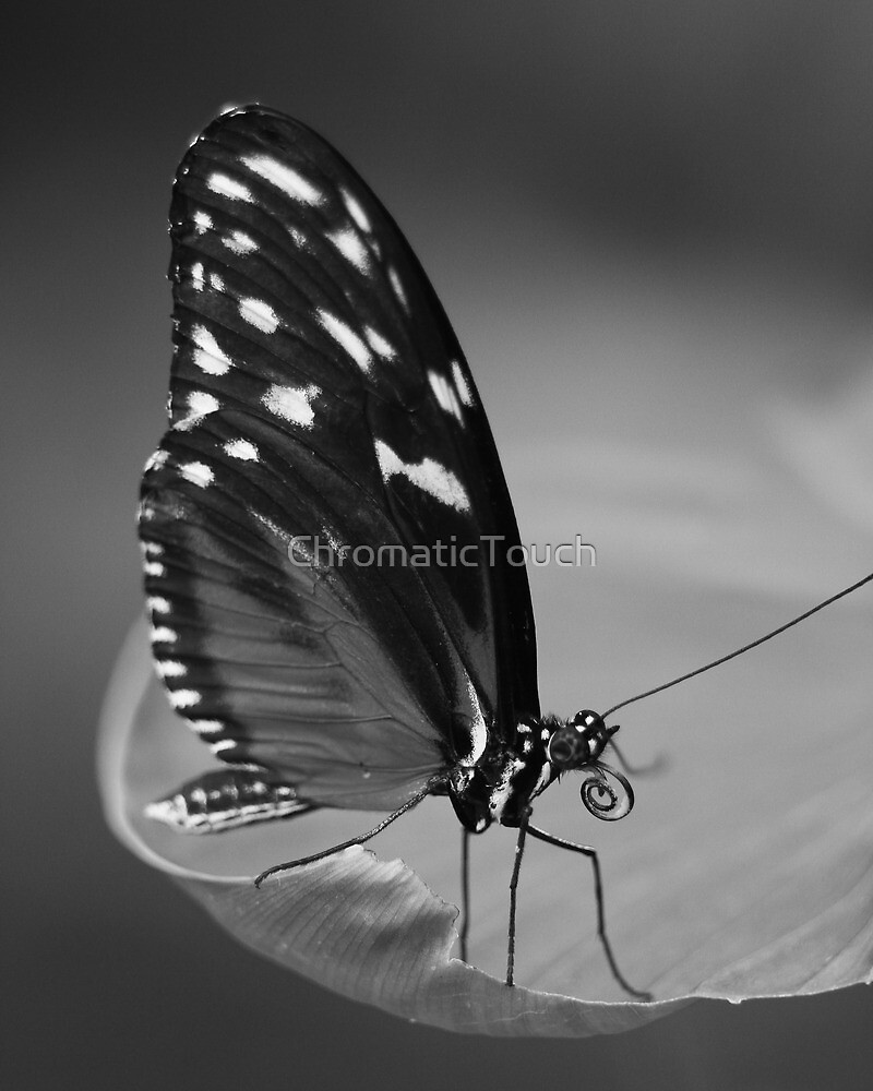 Butterfly by ChromaticTouch