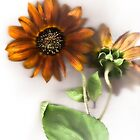 Soft Sunflowers #1 by missmoneypenny
