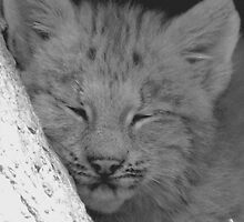 lynx cub by Leeanne Middleton