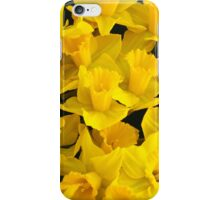 A Bunch of Daffodils iPhone Case/Skin