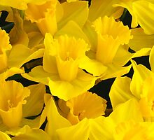 A Bunch of Daffodils by John Wallace