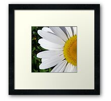Wild Daisy Framed Print