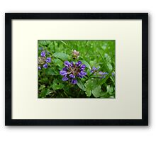 Heal All Framed Print