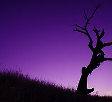 A Lone Tree by aureecejustin
