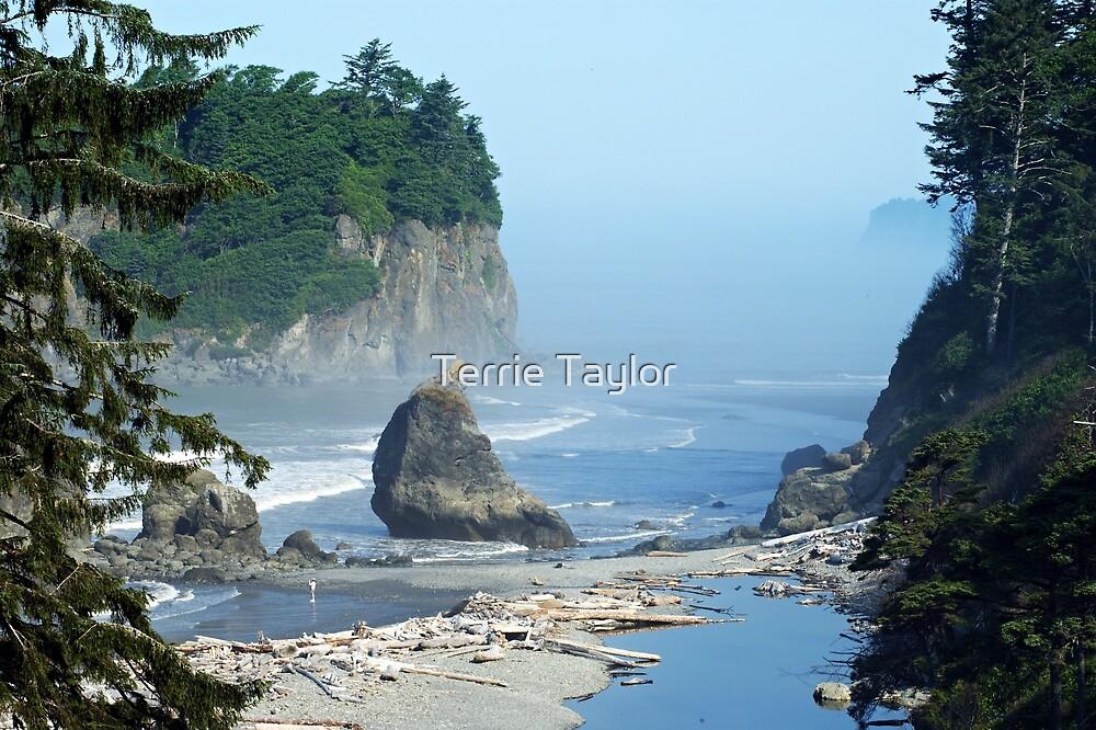 Mist- Ruby Beach, Wa. by Terrie Taylor