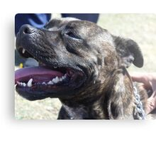 staffordshire bull terrier head Metal Print