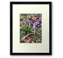 Spring Flowers and May Showers Framed Print