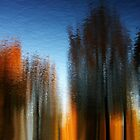 Four Seasons by Bluesrose