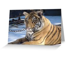 Tony the Siberian Tiger Greeting Card
