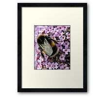 Up Close and Personal - Bumble Bee at Work  Framed Print