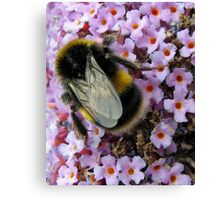 Up Close and Personal - Bumble Bee at Work  Canvas Print