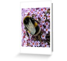 Up Close and Personal - Bumble Bee at Work  Greeting Card