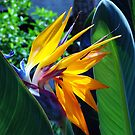 Yellow Bird of Paradise by Susanne Van Hulst