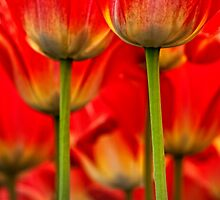 Seeing Red by Claudia Kuhn