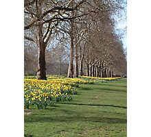 St Jame's Park in the spring Photographic Print