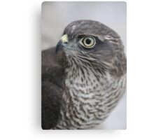 Sparrowhawk 'Buffy' Canvas Print