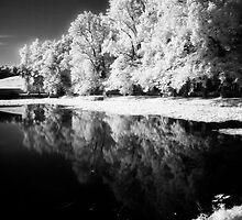 Reflections in Pond by Ethem Kelleci